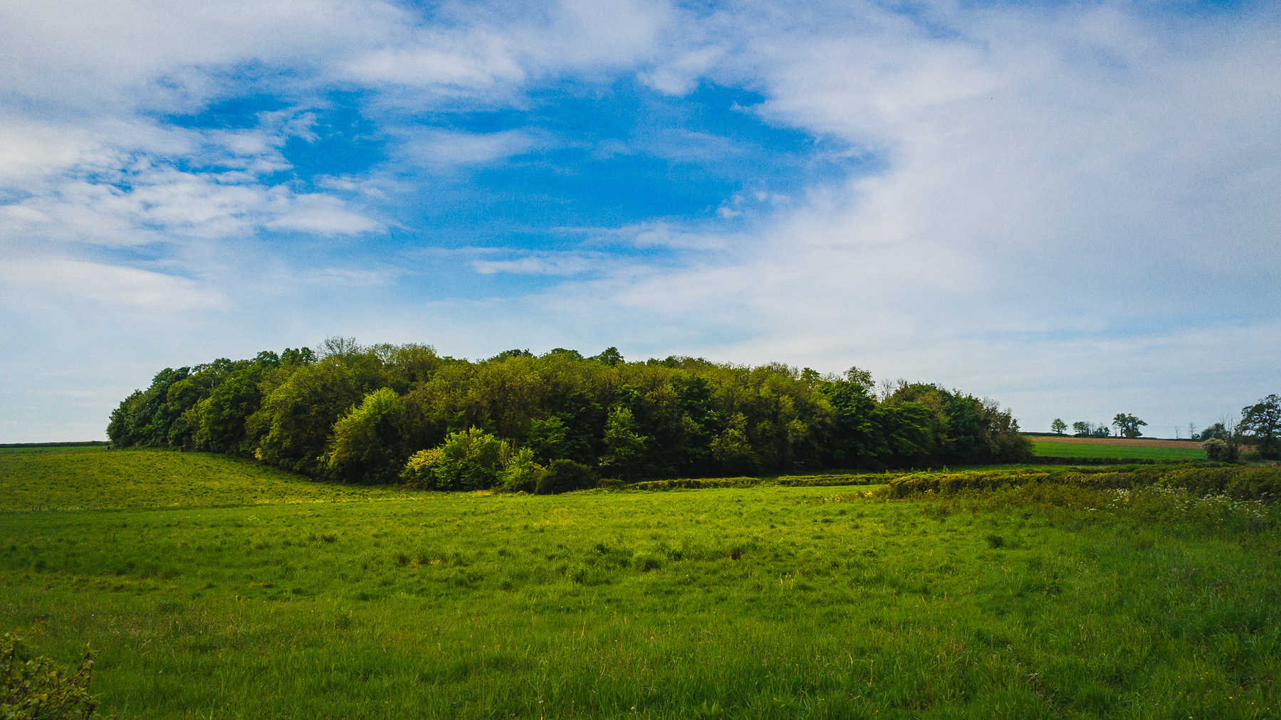 photo of trees in the countryside
